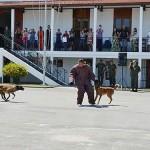 Companhia de Polícia forma novos adestradores de cães de guerra