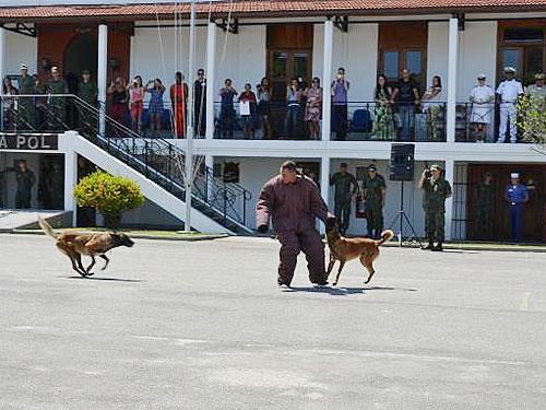 Cães recebem adestramento na Companhia de Polícia da Tropa de Reforço