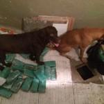 Batalhão de Ações com Cães(BAC) realiza grande apreensão de drogas