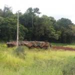 Exército realiza treinamento com os VBTP-MR Guarani em Apucarana