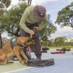 FAB forma nova turma de condutores e cães farejadores