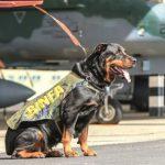 Cães farejadores da FAB e a sua utilização nos Batalhões de Infantaria