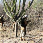 4º Batalhão de Infantaria Leve realizou o Estágio de Adaptação à Caatinga