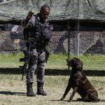 Batalhão de Ações com Cães treina para as Olimpíadas Rio 2016