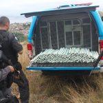 PM apreende 197 cartuchos de explosivos em casa abandonada de Niterói